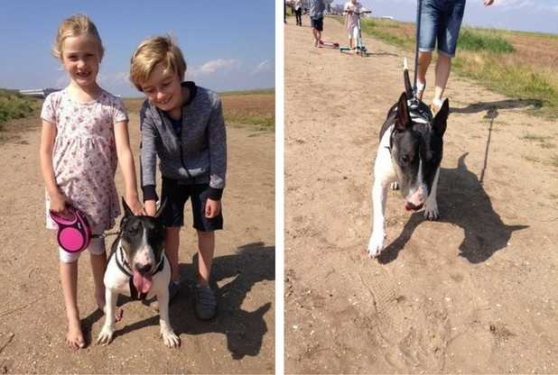 Molly (6) and Joshua (8) Brown with Tia their Bull Terrier